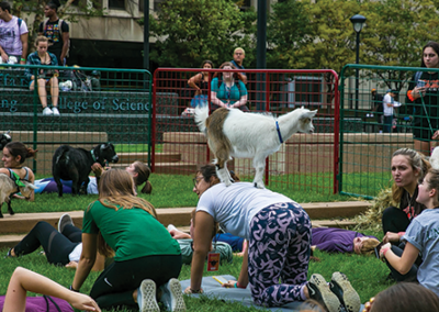 Goat Yoga in the Plaza